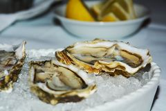 Oysters, ice and lemons, background, close up Royalty Free Stock Photo