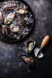 Oysters on ice in plate Royalty Free Stock Photos