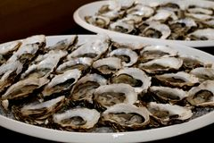 Oysters in ice on plate. Ready for use. fresh seafood, shellfish Stock Photography