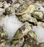 Oysters on ice for sale. Closed oysters on ice for sale at chelsea market, New York Stock Image