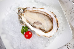 Oysters on ice, small dof Royalty Free Stock Image
