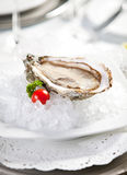Oysters on ice, small dof Royalty Free Stock Photography