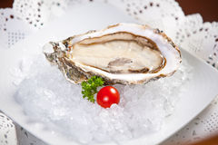 Oysters on ice, small dof Stock Images