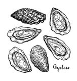 Oysters ink sketch. Stock Photo
