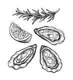Oysters ink sketch. Stock Photography