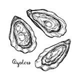 Oysters ink sketch. Stock Image