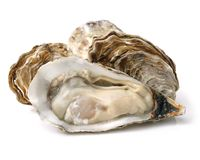 Oysters isolated. On a white background Royalty Free Stock Images