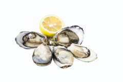 Oysters - Isolated. Oysters - slice lemon isolated on white background Royalty Free Stock Photography