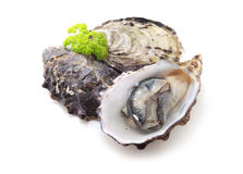 Oysters. Isolated on white background Stock Photo