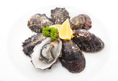 Oysters Stock Images