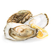 Oysters isolated on a white Royalty Free Stock Images