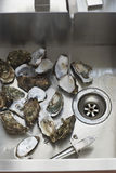 Oysters in kitchen sink elevated view close-up Stock Images
