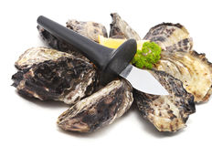 Oysters knife Royalty Free Stock Photos