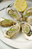 Oysters with lemon Stock Photos