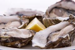 Oysters and Lemon Royalty Free Stock Images