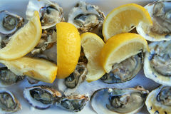 Oysters and lemon Royalty Free Stock Photography