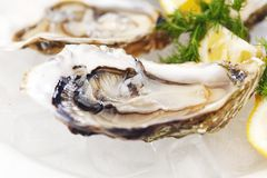 Oysters with lemon and dill Stock Photos