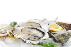 Oysters with lemon and dill Royalty Free Stock Photos