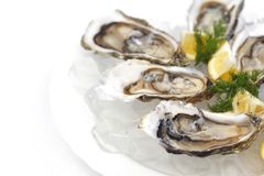 Oysters with lemon and dill Royalty Free Stock Photo