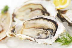 Oysters with lemon and dill Stock Photo