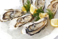 Oysters with lemon and dill. On plate with ice Royalty Free Stock Photo