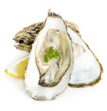 Oysters with lemon and parsley close-up isolated. Stock Images