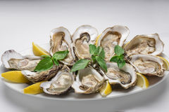 Oysters with lemon. On the plate isolated on white background Stock Photos
