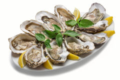 Oysters with lemon on the plate Stock Photos