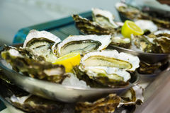 Oysters with lemon on plates Royalty Free Stock Photography