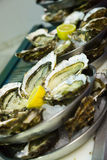 Oysters with lemon on plates Stock Images