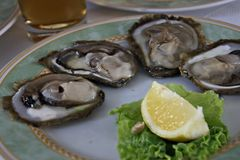Oysters and a lemon segment. Oysters (shallow depth of field). Focus on center Stock Photos