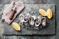 Oysters and lemon. Oysters on stone plate with ice and lemon Stock Image