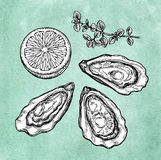 Oysters with lemon and thyme. Ink sketch on old paper background. Hand drawn vector illustration. Retro style Stock Photos