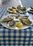 Oysters. With lemon wedges on white plates on blue checked table cloth on outdoor stall in Chinon France Royalty Free Stock Images