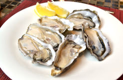 Oysters. With lemon on a white plate Stock Image