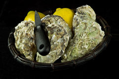 Oysters and lemons Stock Photo