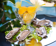 Oysters with lemons Stock Photography