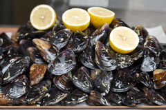 Oysters with lemons in the shop Royalty Free Stock Images