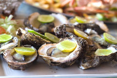 Oysters with lime slices Stock Images