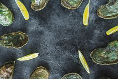 Oysters with limes on dark background. Delicious sea food composition. Flat lay. Top view royalty free stock images