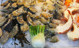 Oysters and lobster in display at fishmarket Stock Images