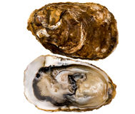 Oysters (Marennes-Oleron) Royalty Free Stock Images