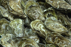 Oysters at the market Stock Image