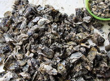 Oysters in the market Stock Photos