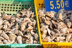 Oysters market Stock Photography