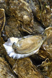 Oysters at the market Stock Photo