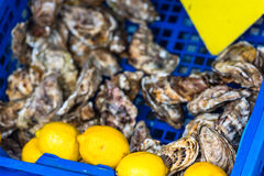 Oysters market in Cancale, France Royalty Free Stock Photos
