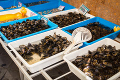 Oysters in the market. Mediterranean market. Marine products Stock Images