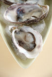 Oysters Natural Stock Image