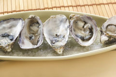 Oysters Natural Stock Photography